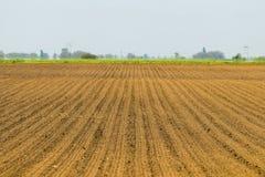 Campo semeado Campos agrícolas na mola Colheitas da sementeira fotos de stock royalty free