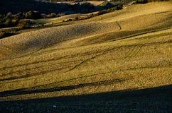 Campo seminato con grano immagini stock
