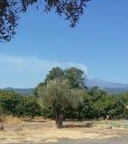 Campo siciliano Imagens de Stock Royalty Free