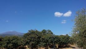 Campo siciliano com o vulcão de Etna Fotos de Stock