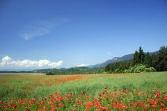 Campo sob montanhas Fotografia de Stock Royalty Free