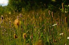 Campo solar Foto de Stock Royalty Free
