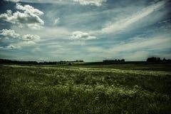 Campo soleado Fotos de archivo libres de regalías