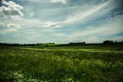Campo soleado Imagen de archivo libre de regalías
