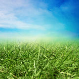 Campo soleado de la primavera Fotografía de archivo