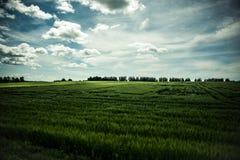 Campo soleggiato Fotografia Stock