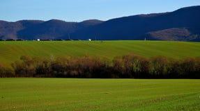 Campo soleggiato con gli alberi e le colline Fotografia Stock