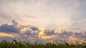 Campo soleggiato nuvoloso di estate archivi video