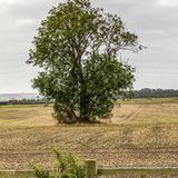 Campo solitário da pensão da árvore Fotos de Stock