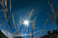 Campo sotto il Sunstar fotografia stock libera da diritti