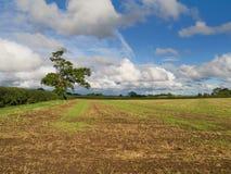 Campo sotto un grande cielo Fotografia Stock