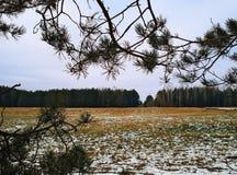 Campo sparso leggermente con la prima neve novembre Immagini Stock