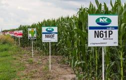 Campo sperimentale del cereale di seme di Midwest U.S.A. Immagini Stock