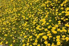 Campo splendido dei fiori Fotografia Stock