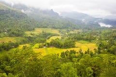 Campo Sri Lanka da montanha Imagem de Stock Royalty Free