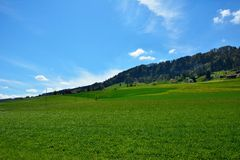 Campo suíço da paisagem durante a mola Fotos de Stock Royalty Free
