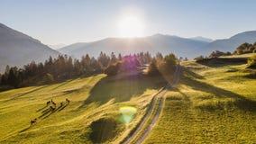 Campo Suiza 4k aéreo del árbol de las montañas de la salida del sol almacen de metraje de vídeo