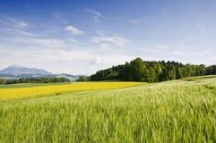 Campo suizo Imagen de archivo