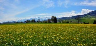 Campo suizo del paisaje durante estación de primavera Imagen de archivo libre de regalías