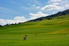Campo suizo del paisaje durante la primavera Foto de archivo