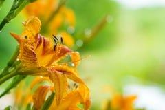 Campo sul do verão das flores fotografia de stock royalty free