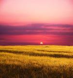 Campo sul tramonto fotografie stock libere da diritti