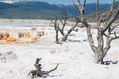 Campo sulfúrico blanco de la roca de Mammoth Hot Springs en Yellowstone Fotografía de archivo libre de regalías