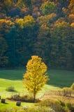 Campo Sunlit no outono imagem de stock royalty free