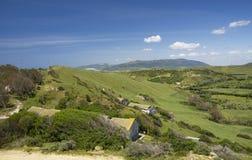 Campo típico da Andaluzia, Espanha Imagem de Stock Royalty Free