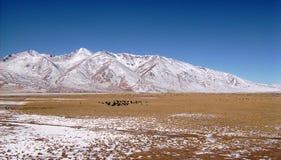 Campo típico dos Himalayas - Tibet fotografia de stock royalty free