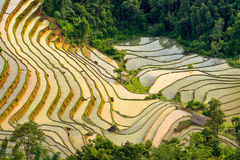 Campo terraced bonito do arroz em Hoang Su Phi em Vietname Fotos de Stock Royalty Free