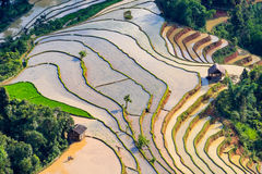 Campo terraced bonito do arroz em Hoang Su Phi em Vietname Foto de Stock