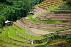 Campo terraced bonito do arroz em MU Cang Chai, Vietname Fotografia de Stock