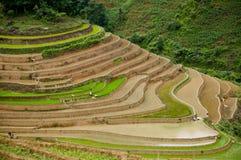Campo terraced bonito do arroz em MU Cang Chai, Vietname Fotos de Stock Royalty Free