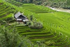 Campo Terraced do arroz Fotografia de Stock