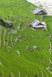 Campo Terraced do arroz Foto de Stock Royalty Free