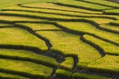 Campo Terraced do arroz Fotografia de Stock Royalty Free