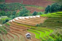 Campo Terraced do arroz em MU Cang Chai, Vietname Imagens de Stock