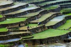 Campo Terraced do arroz em MU Cang Chai, Vietname Imagens de Stock Royalty Free