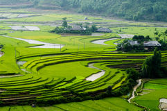 Campo Terraced do arroz em MU Cang Chai, Vietname Foto de Stock