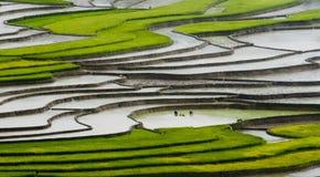 Campo Terraced do arroz em MU Cang Chai, Vietname Foto de Stock Royalty Free