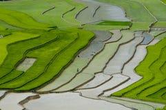Campo Terraced do arroz em MU Cang Chai, Vietname Fotos de Stock Royalty Free