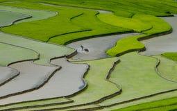 Campo Terraced do arroz em MU Cang Chai, Vietname Fotografia de Stock