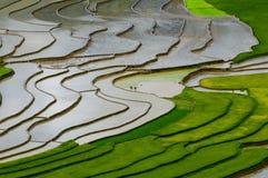 Campo Terraced do arroz em MU Cang Chai, Vietname Fotos de Stock