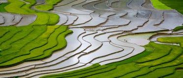 Campo Terraced do arroz em MU Cang Chai, Vietname Imagem de Stock