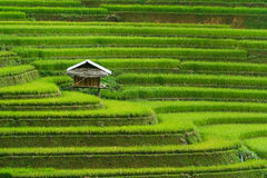 Campo Terraced do arroz em MU Cang Chai, Vietname fotos de stock royalty free
