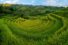 Campo Terraced do arroz em MU Cang Chai, Vietname foto de stock royalty free