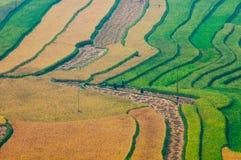 Campo Terraced do arroz em Vietname Imagens de Stock