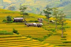 Campo Terraced do arroz em Vietname Fotos de Stock