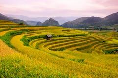 Campo Terraced do arroz em Vietname Foto de Stock